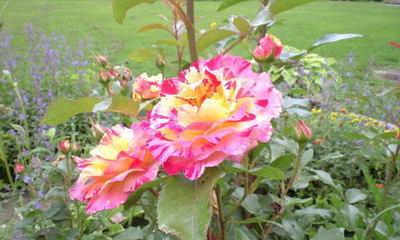 Botanical03_2