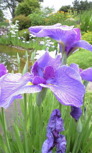 Botanical06_2