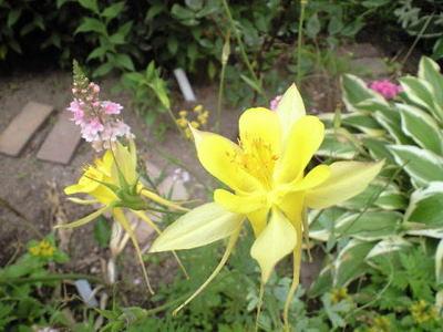 Botanical07