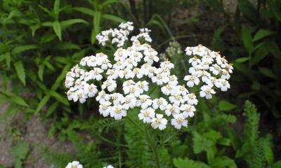 Botanical08